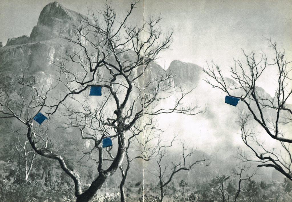 Tree Himalaya